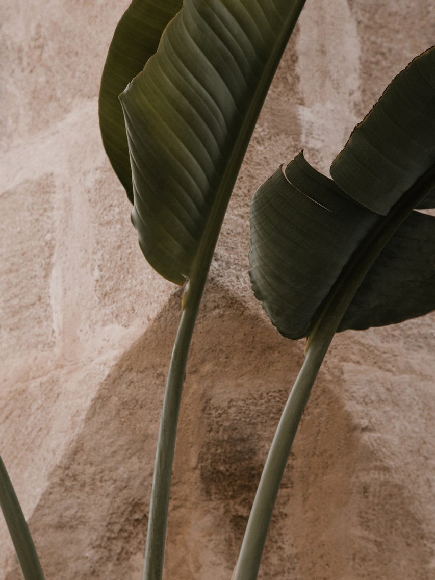 Lumina Design House Project : The Noosa Flower Box - Brand Image