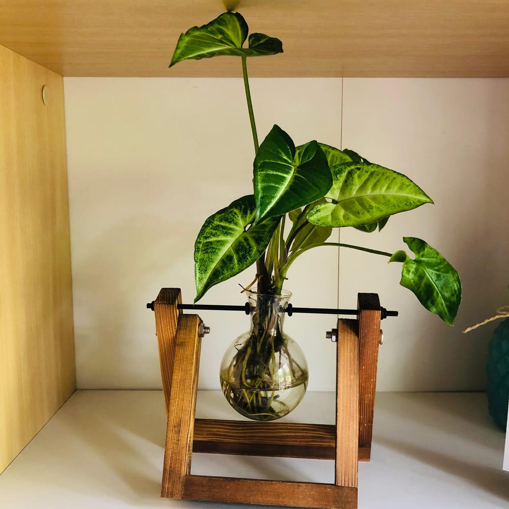 Brooke's Office Plant